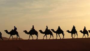 agenzia viaggi in India