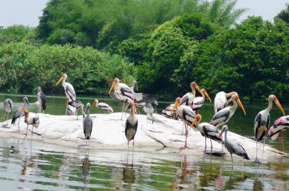 Activities in India